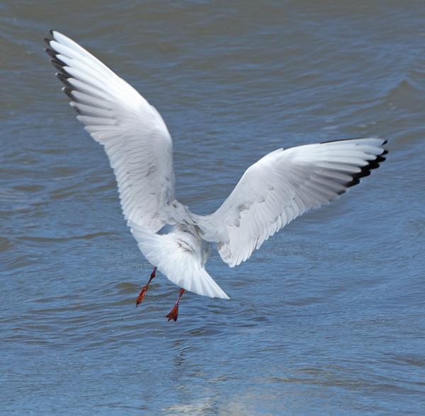 Brendas Nature Photography And Birds Of Virginia