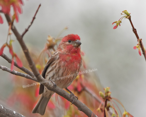 Brenda's Nature Photography and Birds of Virginia