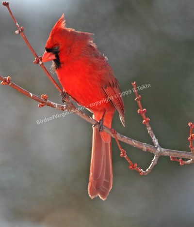 brenda 39 s nature photography and birds of virginia
